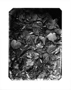 hojas, noviembre 2013