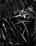 Jardin negro1
