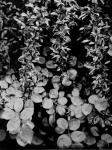 Jardin Negro5