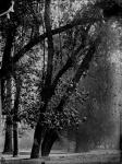 Jardin Negro6